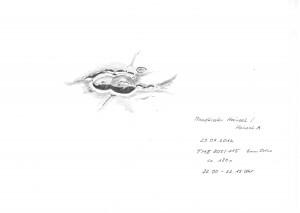 Mondkrater Hainzel 29.07.2012