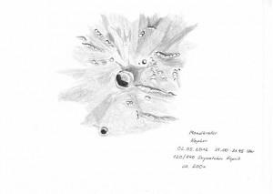 Mondkrater Kepler  02.05.2012